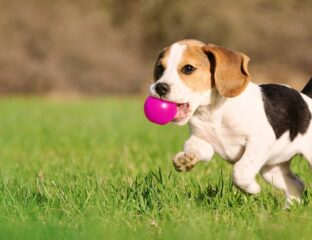 Celebrate National Puppy Day with us by watching these heartwarming puppy videos! Warning – this puppy parade may have you saying