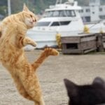 If we lived in a world without cat videos, would YouTube even exist? Dance along with these adorable dancing cat videos.