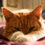 Cat grooming is a crucial part of the pet experience. Find out how to best groom your cat with these tips.