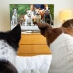 Some dogs love to watch television. Find out why these special canines spend so much time watching TV.