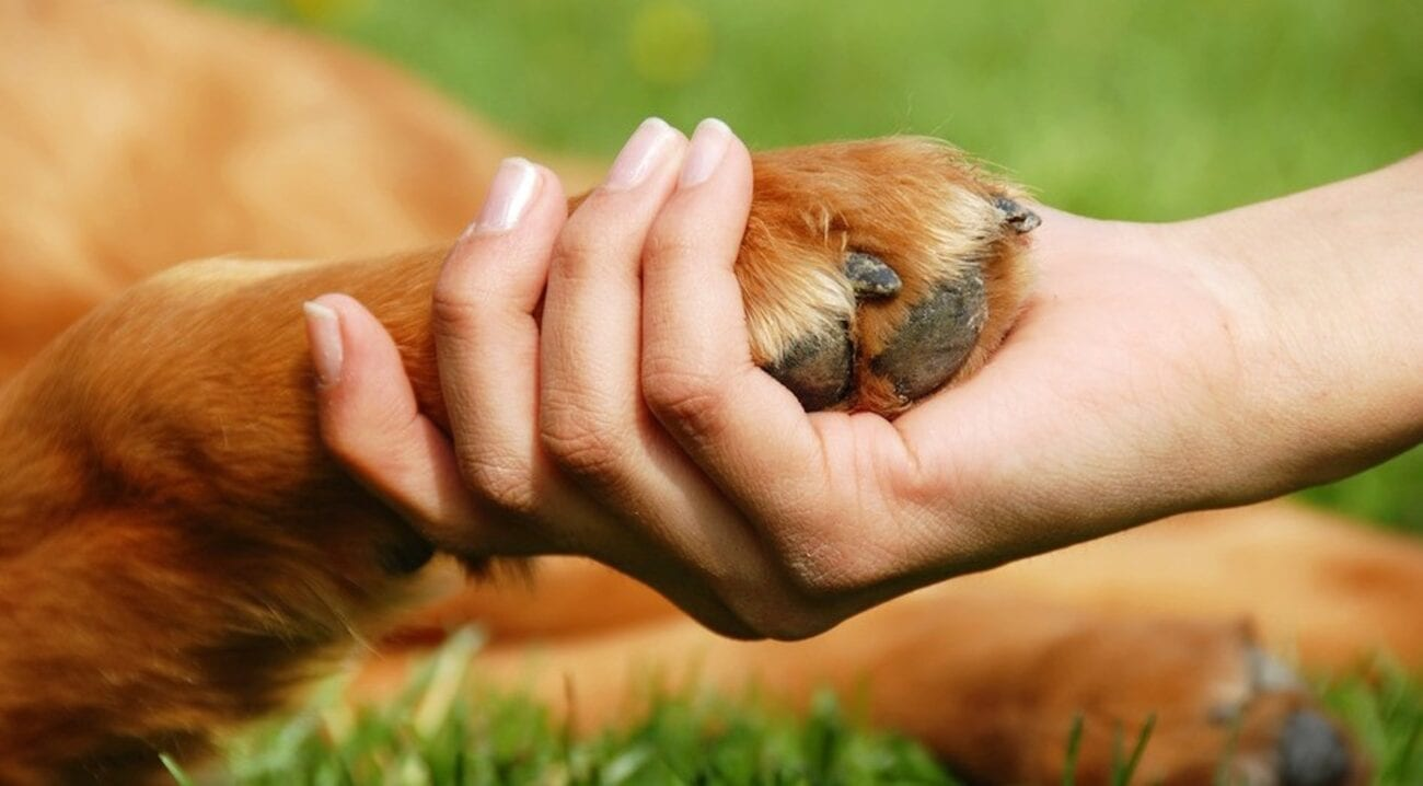 Regardless of the pet you choose to have, you already know how positively your pet has impacted your life. These quotes prove it.