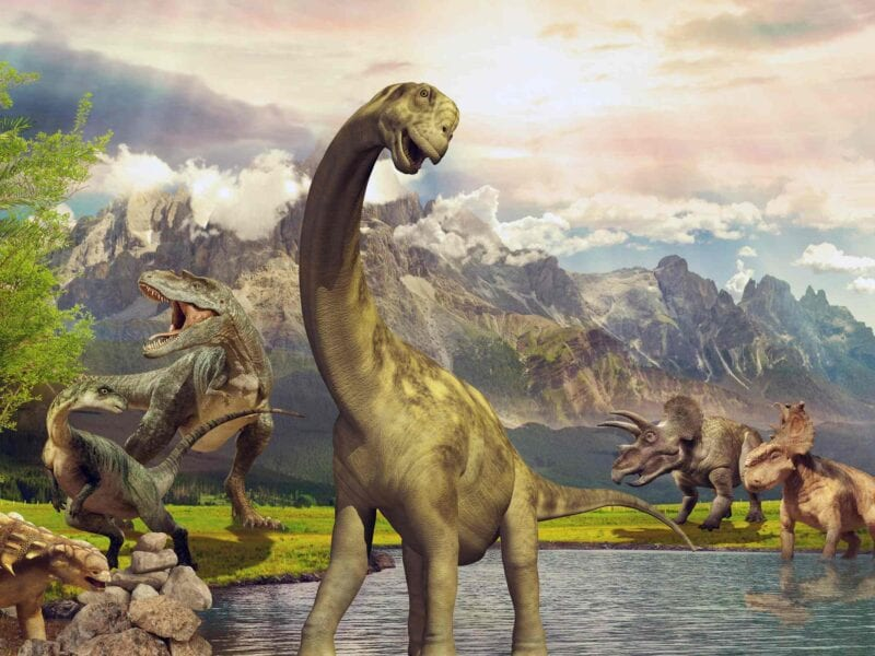 If you're looking for a little dose of dino-fever, tune in to these TV shows about dinosaurs. Some figurative time travel, if you will.