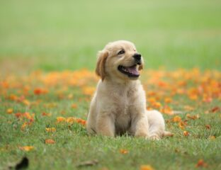 Dogs don't really get their due on the internet, do they? Stop day dreaming about puppies and watch these adorable videos instead.