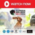 The FCI European Dog Show is back! Find out how to live stream the beloved animal event online for free.