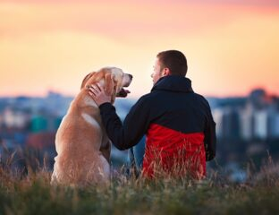 Being a first-time pet owner can be daunting. Find out how to perfect being a pet owner with these crucial tips.