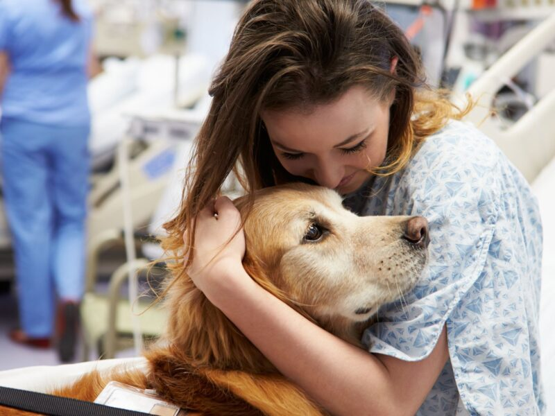 In order for a therapy dog to be certified, they must be trained to be friendly, patient, confident, gentle, and calm. Here's how.