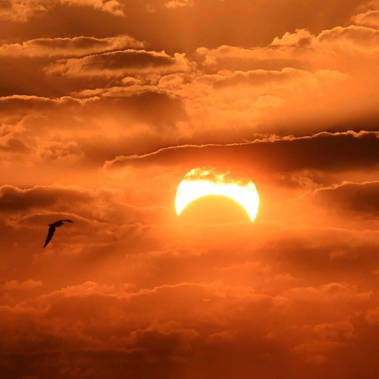 Apparently the Moon liked it, so they put a ring on it! Grab your telescope and dive into these stunning photos of the Ring of Fire solar eclipse.