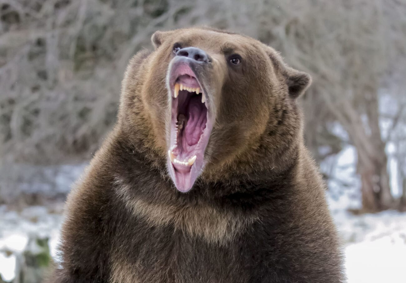 Confused about bullish bulls and bearish bears? Learn what a bear market is, how to survive one, and how you can invest to weather the storm now.