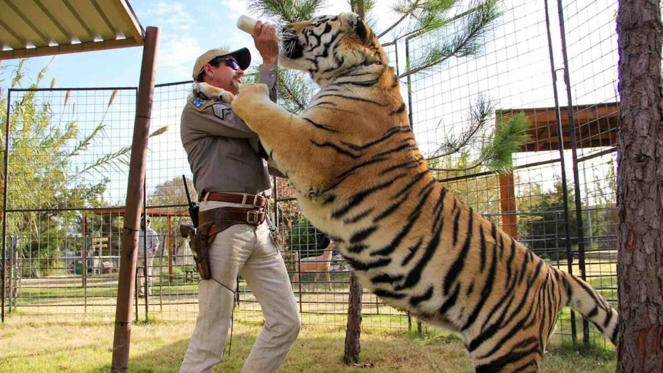When will Peacock's 'Joe Exotic' series set a release date? Dive in to learn everything about the scripted 'Tiger King' series.