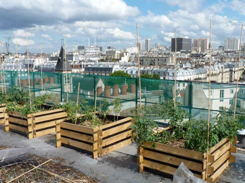 The summer is finally here, but how do you grow anything in a concrete jungle? Check out our awesome ideas for urban gardens any city-slicker can handle.