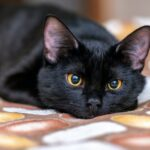 Black Cat Appreciation Day came to pet owners everywhere this week. Cozy up to our list of cute cat memes to help celebrate your favorite felines.