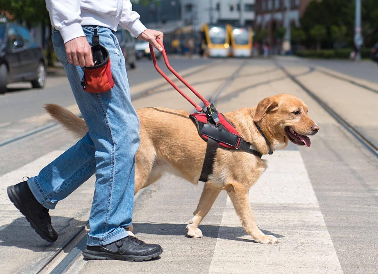 Dog training is a rare skill. Find out how to master the art of dog training with these quick and easy exercises.