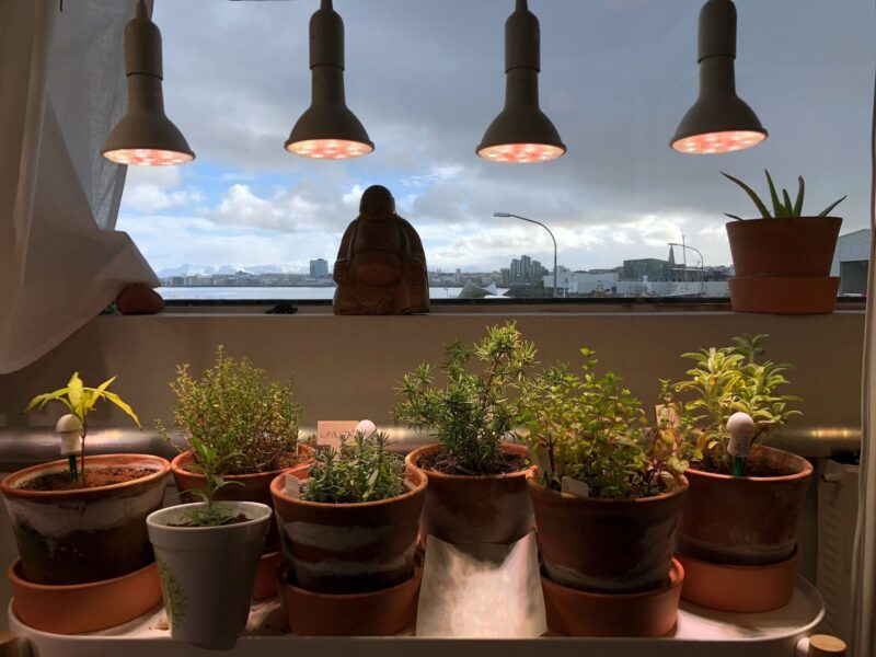 Grow lights are the key to raising healthy indoor plants that thrive all year round. Find out how to use grow lights to improve the health of your plants.