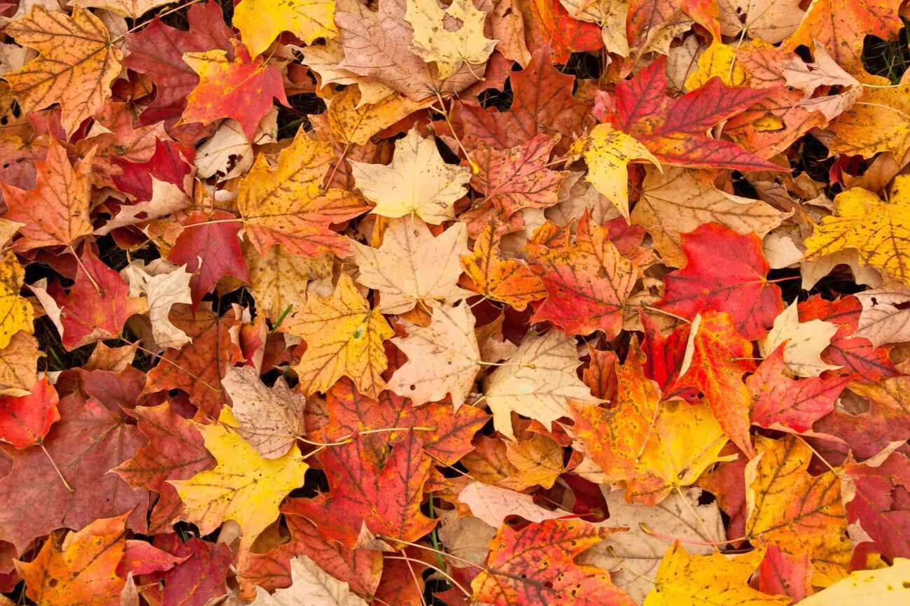 The fall is nearly upon us, and we can taste those PSLs already. Embrace the crisp season of colors with our list of the best quotes about autumn.