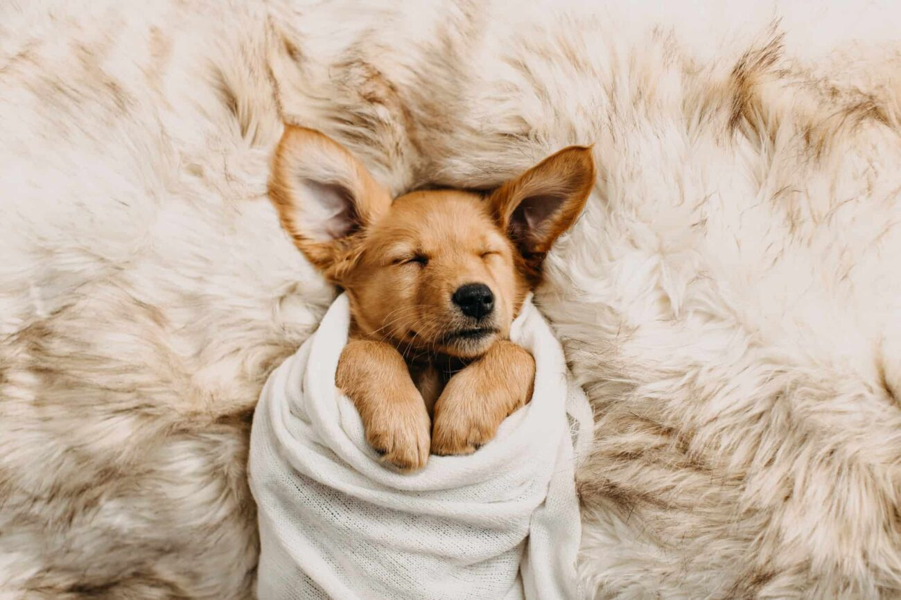 Potty training a puppy is one of the most challenging parts of getting a new furry friend. Make your training easier by reading this comprehensive guide.