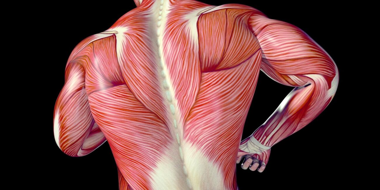 Most people don't know what fascia is, but keeping it healthy can really improve your life. Start feeling great and learn about fascia health today.