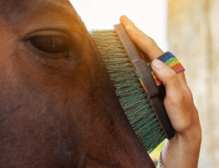 It is important to take good care of your horse. Here are seven tips for grooming your horse that you, and your horse, will absolutely love!