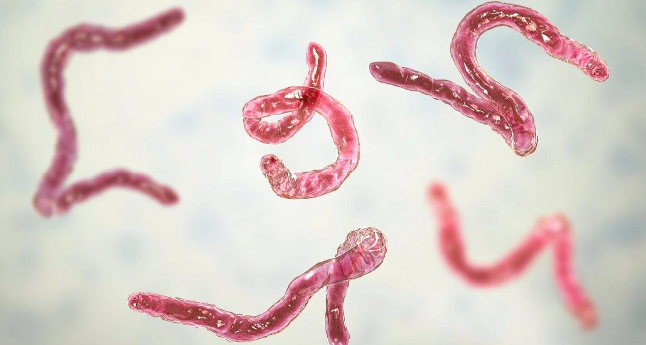 Humans can unfortunately be hosts to a wide variety of intestinal parasites. Learn how to avoid and treat the most common parasites right here.