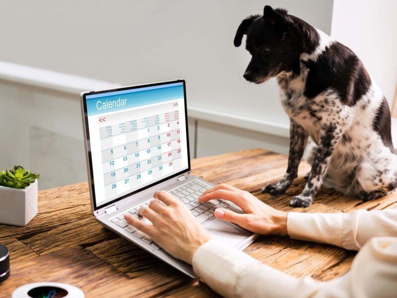 Are you looking for ways to enhance your pet business? Take a look at these fantastic investments that can help grow your business and increase sales!