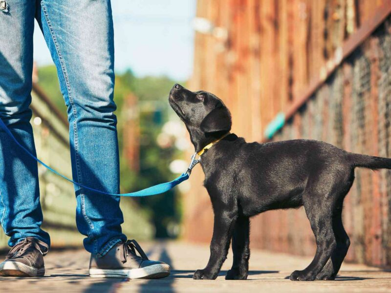 Every dog parent must train their dog so that not just the dog owner but the dog itself can enjoy being an adorable and obedient dog. Here's why.