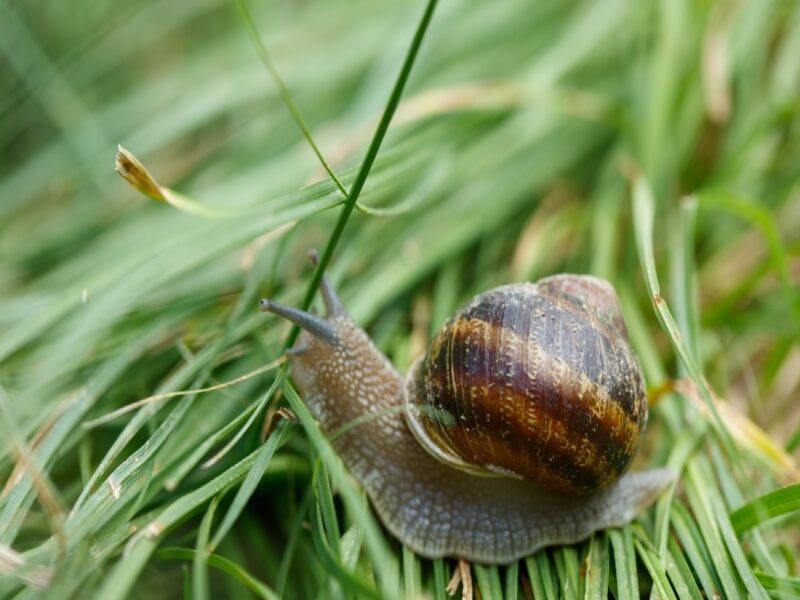 """If you've been in the loop lately, you may have heard of the """"Immortal Snail"""". Discover the meaning behind this unusual TikTok meme."""