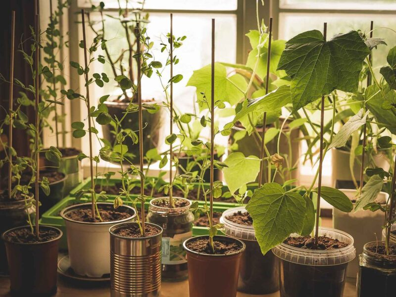 Are you looking to grow a green thumb? Check out these smart and simple tips to make sure your vegetables can grow indoors all year long!